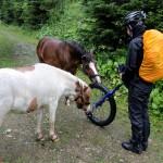 EinradAlpencross04